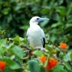 birding-adventures-tv
