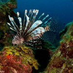 sam-rutherford-dive-belize-aggressor(43)